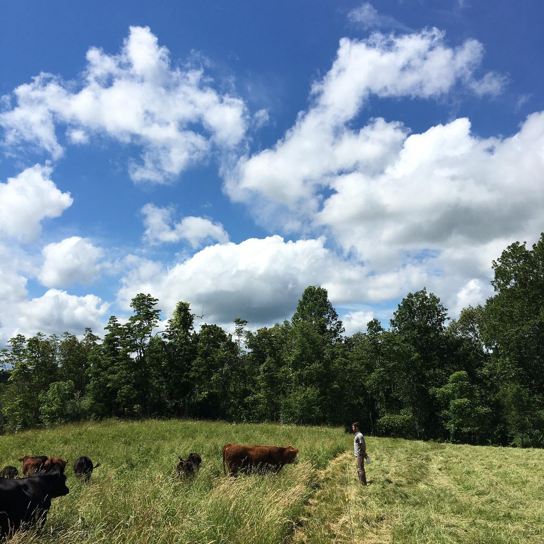 Singletree Farm Herdshare Provides Local Milk